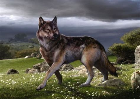 dire wolf image gallery dire wolf