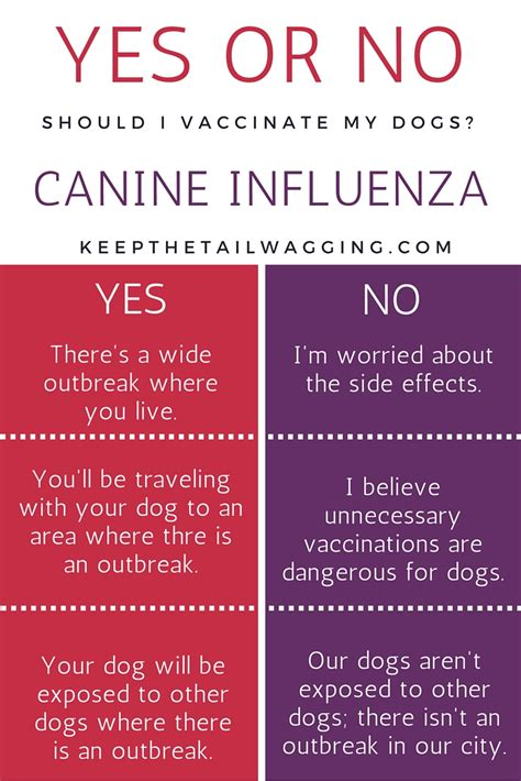 do dogs get the flu what you need to about the flu vaccine keep the wagging