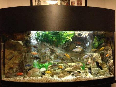 aquarium design for cichlids 72 gallon bow front mixed malawi peacock cichlid aquarium