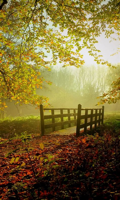 sunny fall day wallpapers  jpg format