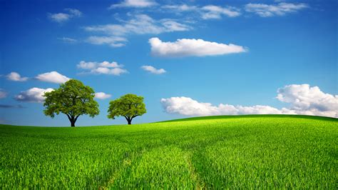 green field  spring daywallpaper