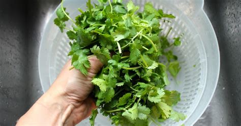 Parsley Detox Heavy Metals by Heavy Metal Detox Drink Using Cilantro Parsley Juice
