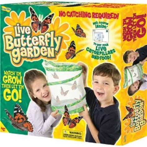 amazon insect lore live butterfly garden kit only 10 95