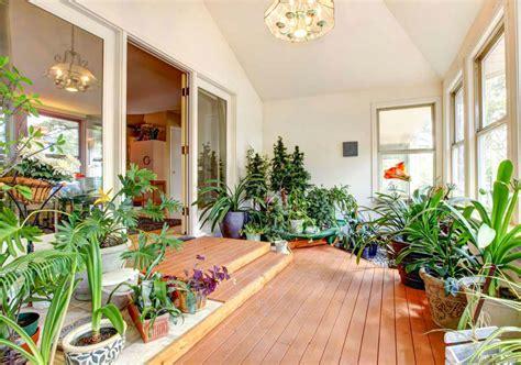 piante da appartamento cura piante da appartamento come prendersene cura