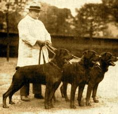 rottweiler origin and history the rottweiler