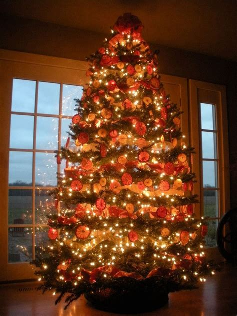 what christmas tree smells like oranges 121 best oranges images on oranges deco and