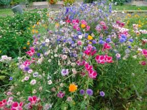 wildflower garden galleryhip com the hippest galleries