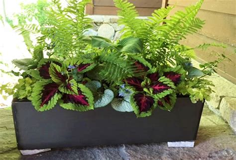 in door plants pot three four plants argements video hill and dale landscapes indoor outdoor potted plants