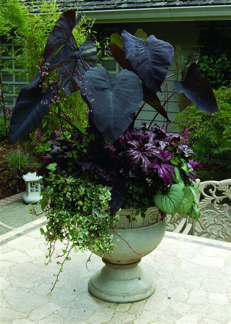 2214 Best Everything Plants And Flowers Images On Pinterest Best 25 Black Flowers Ideas On Pinterest