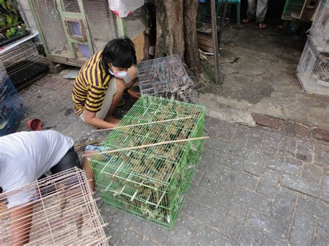 house finch breeding green finch breeding cages bird cages