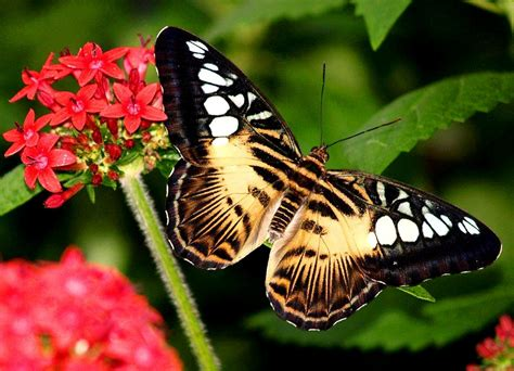 black wallpaper with yellow butterflies black yellow butterfly wallpaper 30879