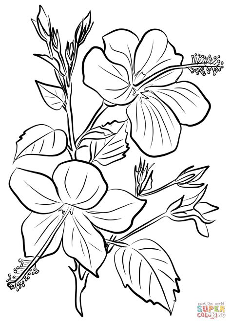 coloring pages of hibiscus flowers detail hibiscus flower coloring page hibiscus coloring