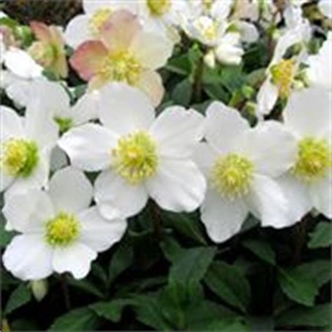 aiuole fiorite tutto l anno piante per aiuole piante da giardino scegliere le