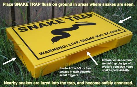 how to catch a snake in the house snake trap to catch snakes