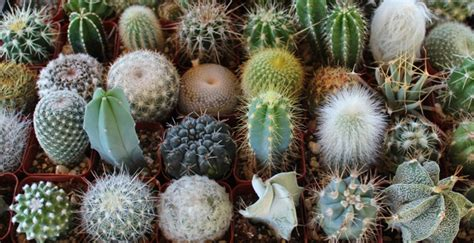 succulents plants adaptations for kids 1 3 what is a cactus smrt english