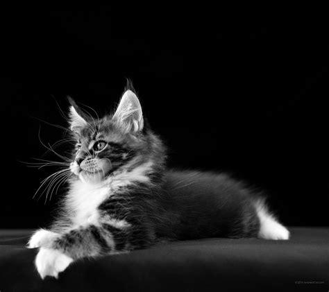 die 80 besten hintergrundbilder der sch 246 nen tiere f 252 r desktop - überwachungskamera Für Tiere