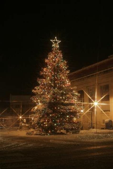 christmas trees in northern mi downtown tree in traverse city picture of traverse city grand traverse county