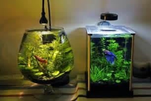 Pin Betta Fish Tanks on Pinterest