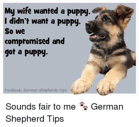 Funny German Memes - funny german shepherd memes of 2017 on sizzle dog meme
