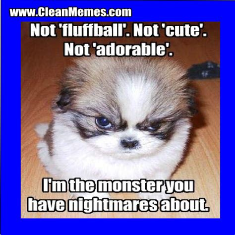 Clean Animal Memes - cute animal memes clean