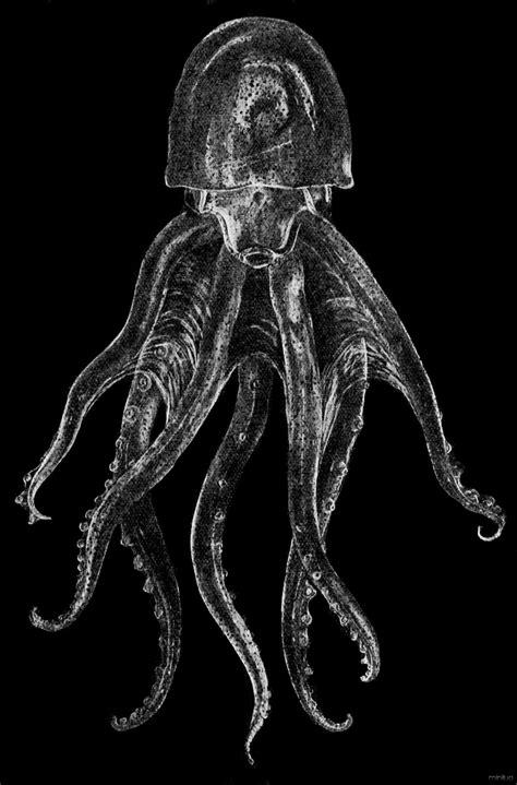 Os animais mais bizarros do mundo #3 | Minilua