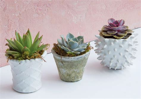 get succulent savvy with these expert tricks atlanta magazine