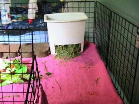 How To Make A Hay Rack For Guinea Pigs by Guinea Pig Hay Feeder Made Out Of Trash Can We Ve