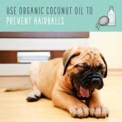 best way to get dog hair off comforter coconut oil for dogs an eco friendly way to pet health
