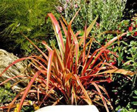 Fleurs Qui Resistent Au Vent by Quelles Plantations Pour Ma Terrasse C 244 T 233 Maison