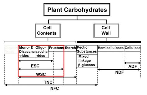 carbohydrates water soluble wsc water soluble carbohydrates dairyland laboratories