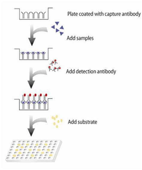 elisa test diagram regenerative thermal oxidizer diagram regenerative free