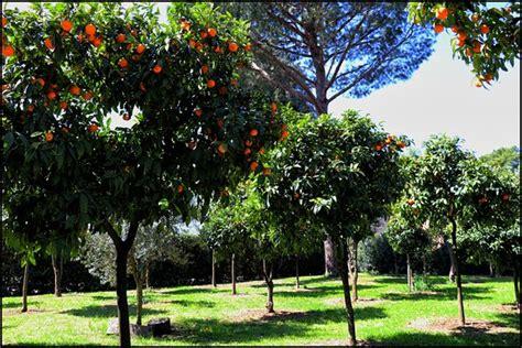il giardino degli aranci giardino degli aranci foto di villa medici accademia