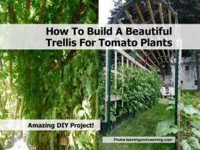 How To Build A Trellis how to build a beautiful trellis for tomato plants