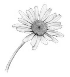Daisy Flower Drawing Tumblr Sketch Coloring Page sketch template