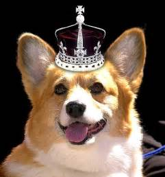 the s corgi follow the piper queen elizabeth and her corgis