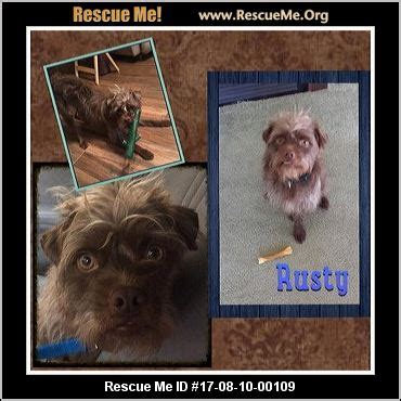 yorkie rescue indiana indiana yorkie rescue adoptions rescueme org