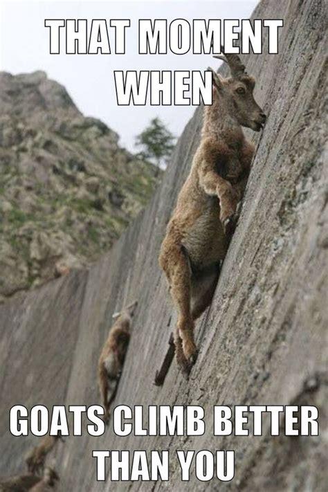 better bouldering that moment when goats climb better than you rock