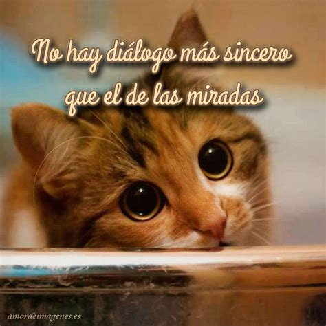 imagenes de amor de gatitos tristes im 225 genes de amor con gatitos lindos