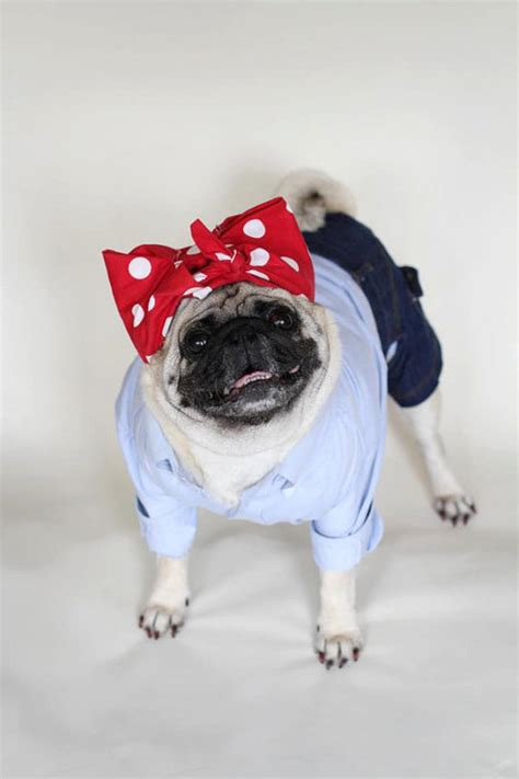 pug attire 15 we can do it