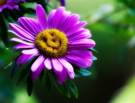 margherita immagini fiori ste artistiche quadri e poster con estate faccina