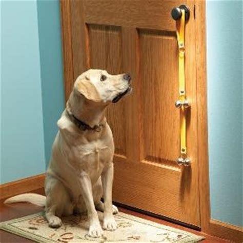 out it porta dottordog 5 consigli per abituare il tuo cucciolo a stare