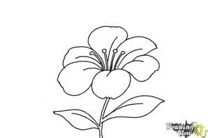 doodle flowers how to how to draw a flower step by step drawingnow