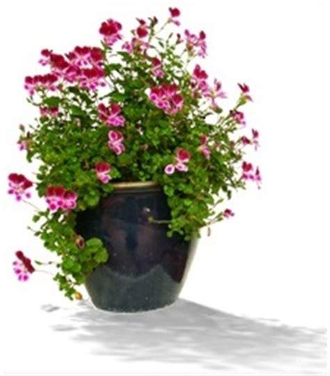 indoor gardening for seniors activities for seniors