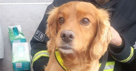 Grenfell Record Notices The Heartbreaking Reason Dogs Are Being Deployed At Grenfell Tower Daily Record