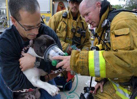 out of the dog house rescue firefighters rescue dogs cats from california house fire today com