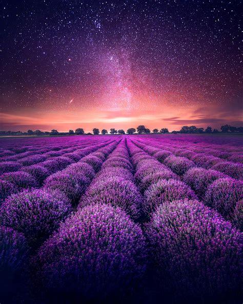wallpaper  lavender field starry sky
