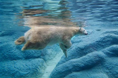 underwater polar bear slider puzzle demosthenes info filtered flexbox a dynamic image gallery