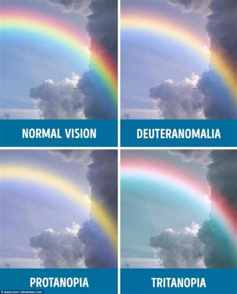 what does color blindness look like this is what the world looks like to the colourblind