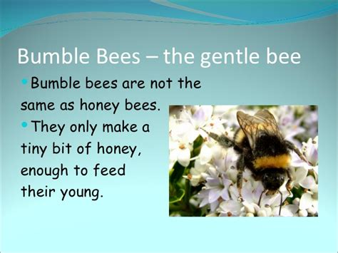 Bees Powerpoint1 Singing Bee Powerpoint Template