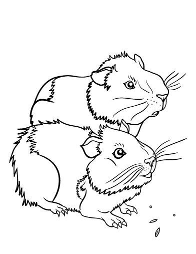 printable guinea pig coloring page free pdf download at